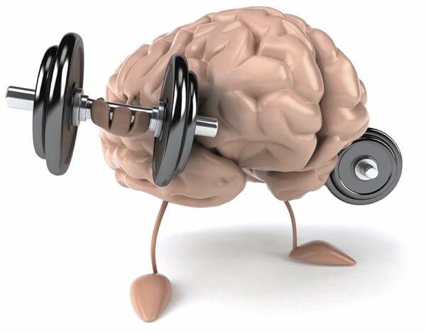Memória muscular como funciona