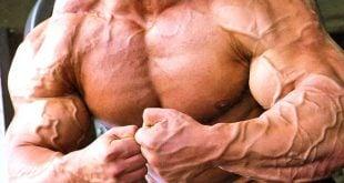 aumentar a vascularização músculos