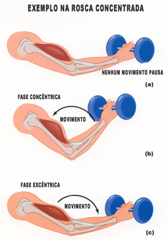 fase excêntrica e concêntrica musculação exercícios