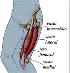 como é formado o quadríceps músculo das pernas