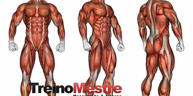 7 Dicas de Como Perder Gordura sem Perder Massa Muscular