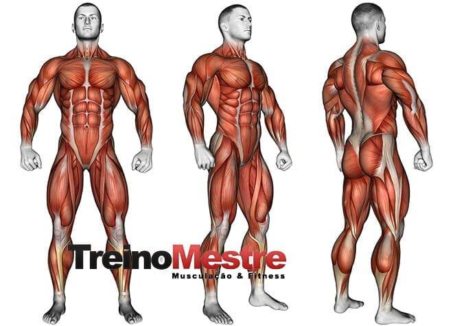 perder gordura sem perder massa muscular