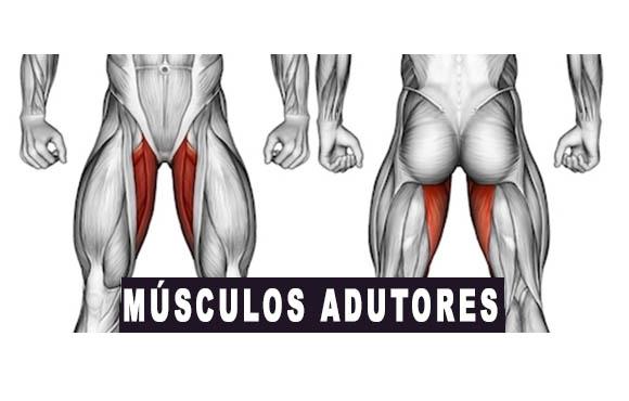 músculos adutores