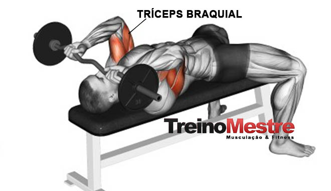 tríceps testa músculos