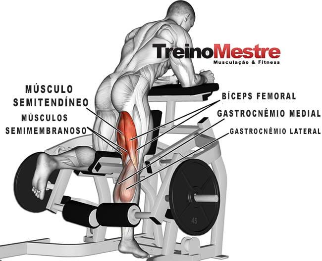 mesa flexora em pé músculos