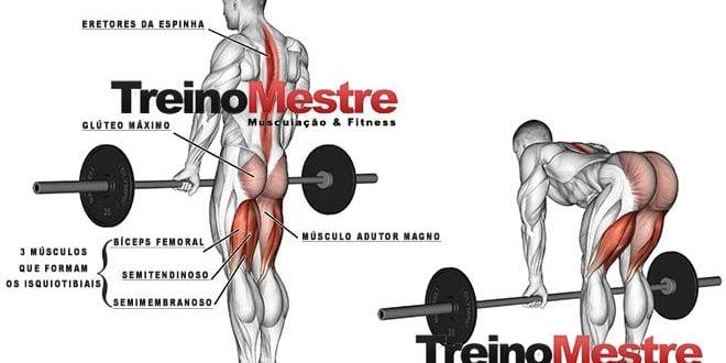 stiff músculos trabalhados