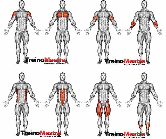 Não perder musculos resultados musculação