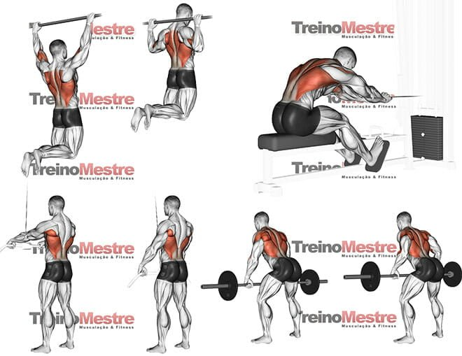 Exercícios para Latíssimo do dorso (grande dorsal) treino costas