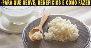 Kefir para que serve benefícios e como usar