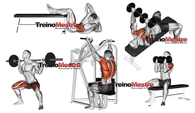 programa de exercicios para hipertrofia muscular