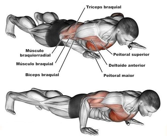 músculos trabalhados flexão de braço