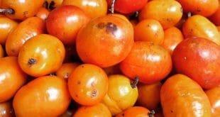 Acerola - Os seus 10 principais benefícios para saúde