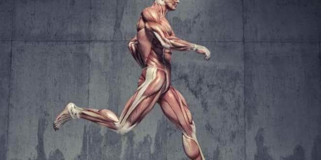 Fortalecimento de core para corredores, exercícios e qual sua importância?