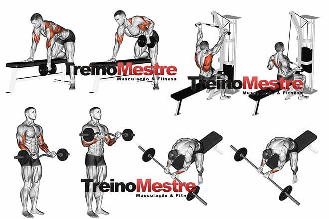 Treino de costas, bíceps e antebraços