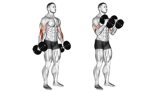 Jak Naturalnie Zrobić 38, 40, 50 cm w Bicepsie Zaczynając z 26cm? ile cm w bicepsie można mieć?