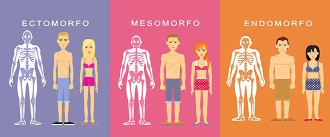Ectomorfo Mesomorfo Endomorfo diferenças