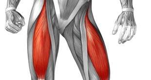 treino de pernas para ectomorfos