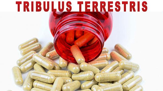 7- Tribulus Terrestris