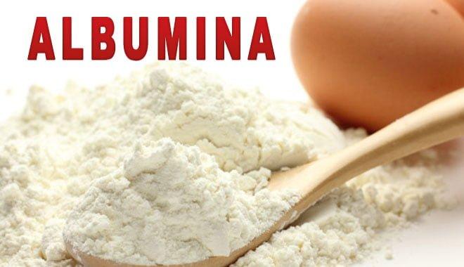 albumina proteína clara do ovo