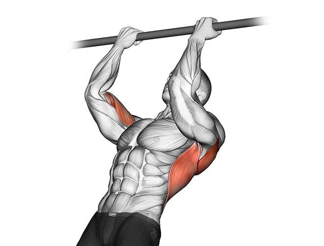 para bíceps benefícios