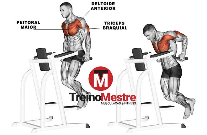 músculos trabalhados solicitados barras paralelas
