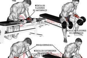 Antebraço: Músculos, 7 exercícios e dicas para antebraços mais fortes