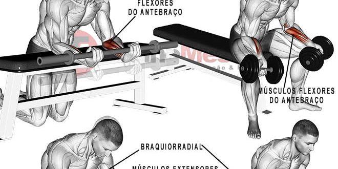 antebraço músculos exercícios