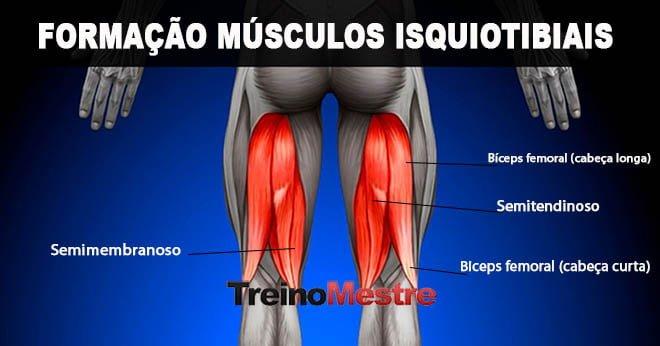 isquiotibiais músculos localização nomes