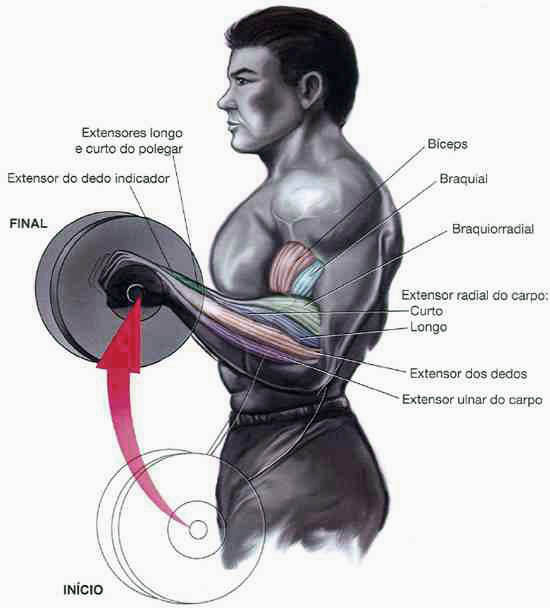 rosca inversa músculos trabalhados