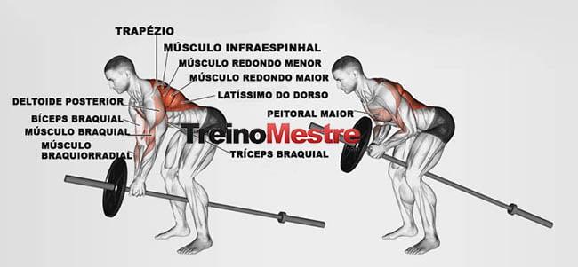 músculos trabalhados