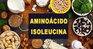 Isoleucina aminoácido fontes