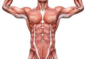 Ativação e Recrutamento muscular: O que significa, diferenças e como interfere no seu treino!