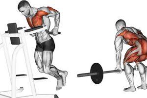 10 Melhores Exercícios para Ganhar Massa Muscular