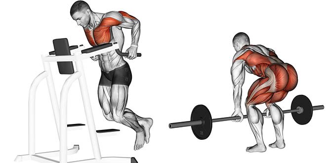 melhores exercícios ganho de massa muscular