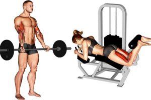 Treino de Academia: Ficha para Iniciantes na Musculação