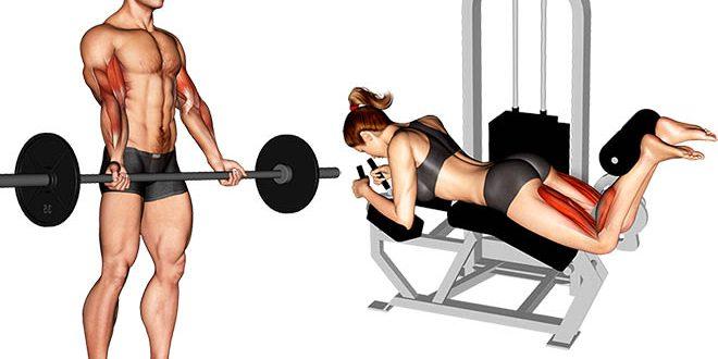 treino de academia