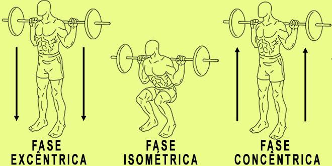 fases concêntrica, excêntrica e isométrica no agachamento