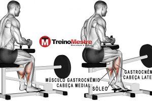 Gêmeos Sentado: Músculos solicitados e Execução correta para mais resultados