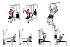 15 Melhores Exercícios para Costas Largas e Volumosas!