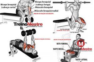 35 Melhores exercícios para cada grupo muscular segundo a ciência