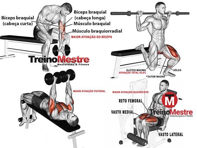 melhores exercícios musculação treino ativação músculos